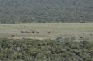 Tour am südlichen Kap von East London nach Kapstadt_24