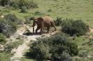 Tour am südlichen Kap von East London nach Kapstadt_26