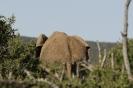 Tour am südlichen Kap von East London nach Kapstadt_39