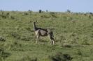 Tour am südlichen Kap von East London nach Kapstadt_46