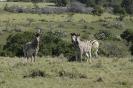 Tour am südlichen Kap von East London nach Kapstadt_8